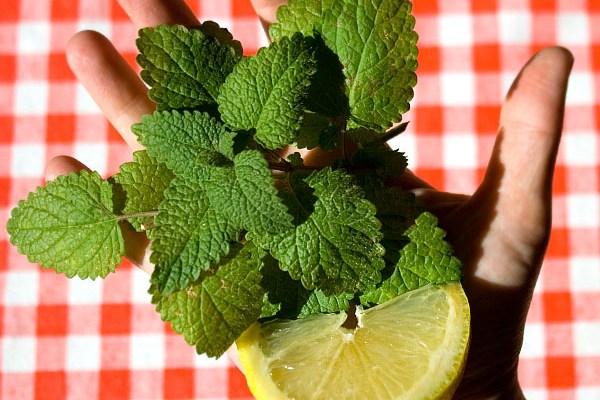 tisana di melissa e limone