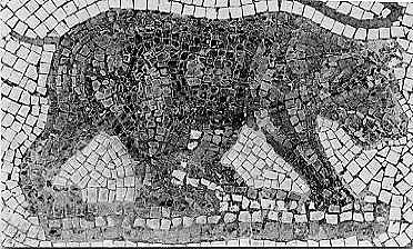 atlasbär ursus arctos crowtheri
