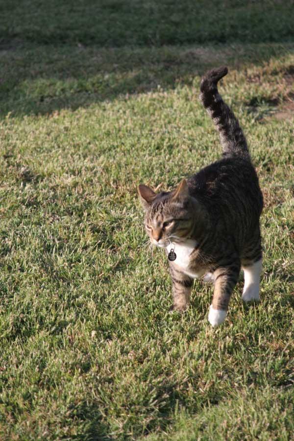 Hard to describe his walk - not a strut, not that arrogant. Perhaps a stalk...