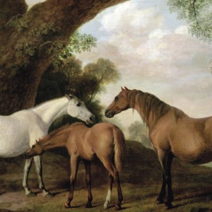 two shafto mares and a foal - stubbs