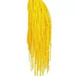 Amaranthus conservat Galben