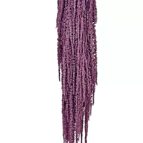 Amaranthus conservat Mov