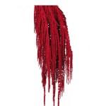 Amaranthus conservat Rosu burgund