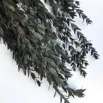Eucalipt parvifolia detaliu g