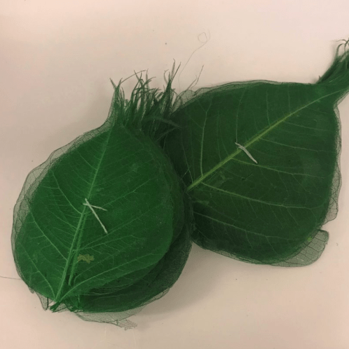 Frunze Verde Iarba