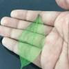 Frunze uscate schelet verde detaliu