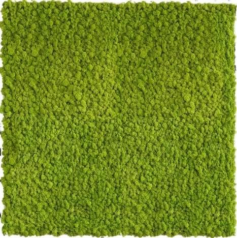 Gradina verticala licheni conservati ARTFLORA GreenLime