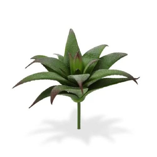 Haworthia artificiala 20cm