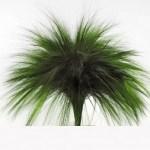 Iarba Barba conservata verde iarba