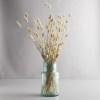 Lagurus natural vaza pic