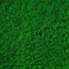 Licheni conservati Green Grass