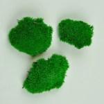 Muschi stabilizat bombat mini Green Apple