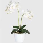 Orhidee decorativa alba ghiveci 50cmG