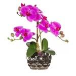 Orhidee fucsia in ghiveci argintiu
