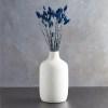 Phalaris blue vaza pic