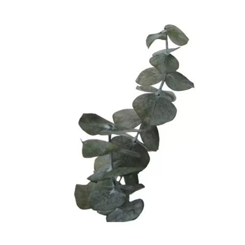 Planta conservata Eucalipt verde albastru detaliu