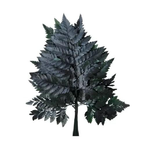 Planta conservata Feriga Cuero verde