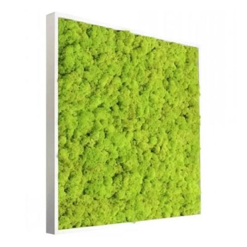 Tablou licheni conservati