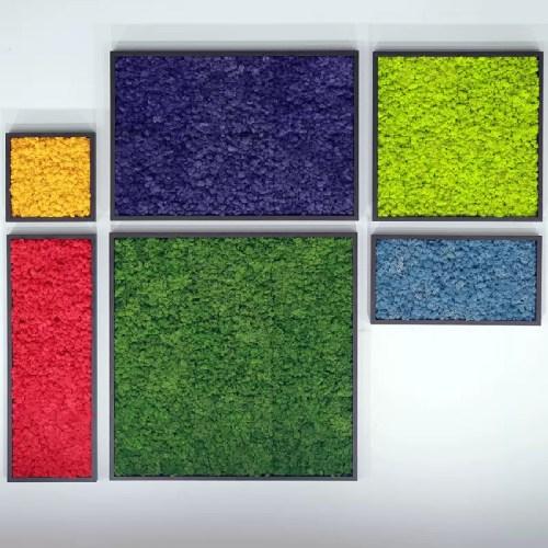 Tablou licheni stabilizati detaliu c