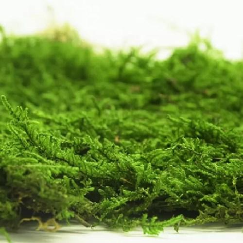 artflora flat moss 1