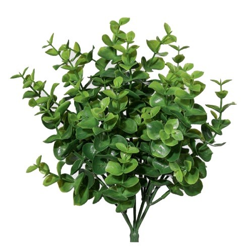 eucalipt h35