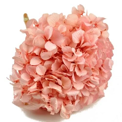 hortensia stabilizata roz