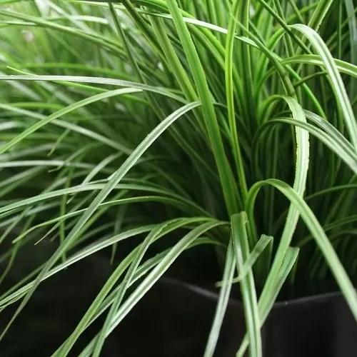iarba bambus artificiala H40 2