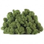 licheni vrac artflora greenbroccoli