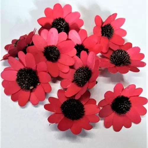 Capete flori margareta rosu