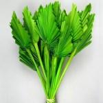 Frunze Palmier mediu Verde intens