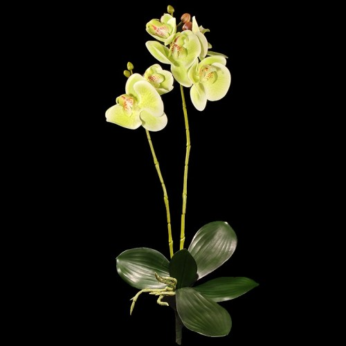 Orhidee galben verde