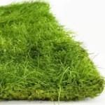 artflora flat grass