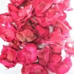 flori cocos cyclam