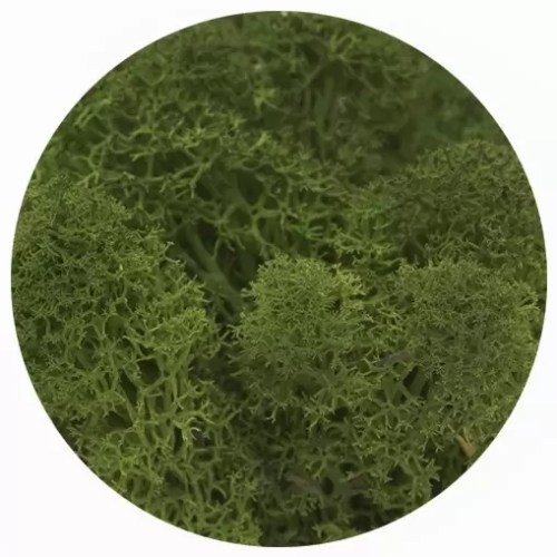 licheni premium green broccoli 2