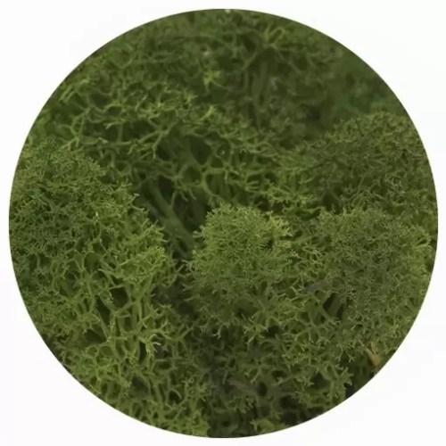 licheni premium green broccoli 2