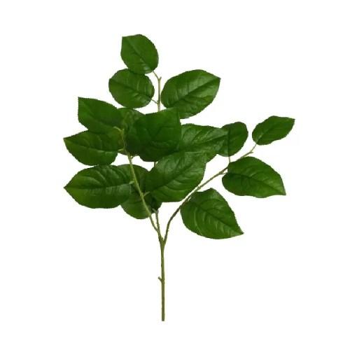 Creanga Salal verde 80cm