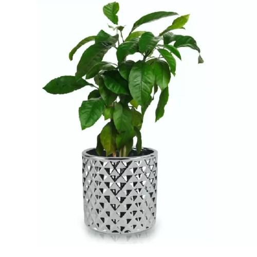 Ghiveci Moon rotund Silver 119 planta