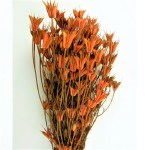 PU Nigella Oranj natur set 1