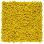 Gradina verticala Licheni Yellow Limone