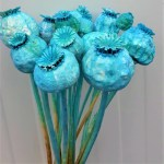 Mac albastru turquoise set