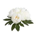 Buchet Bujori alb 32cm