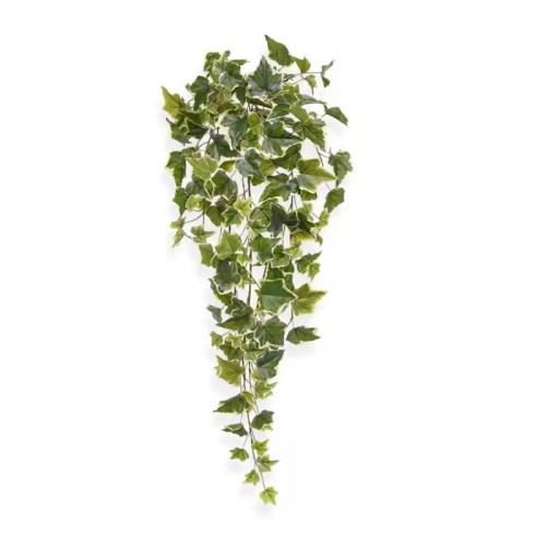 Iedera Hedera variegata 65cm