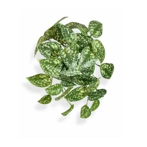 Scindapsus pictus variegat 25cm