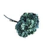 Hortensia stabilizata Turquoise