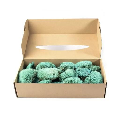 Muschi bombati mini Turquoise