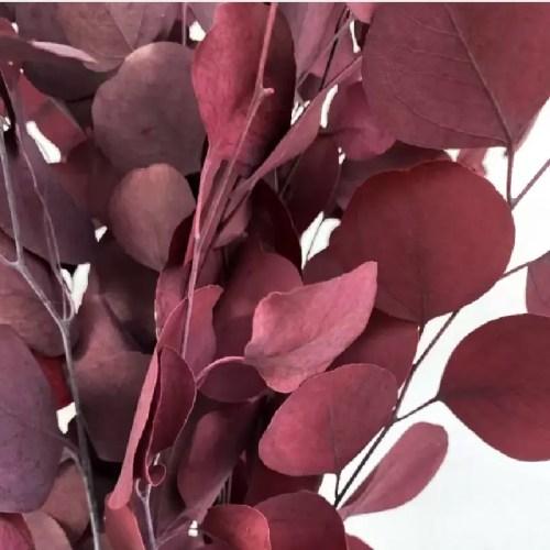 Eucalipt banut rosu pic