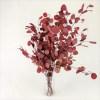 Eucalipt banut rosu vaza pic