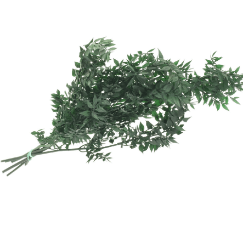 Ruscus stabilizat verde inchis