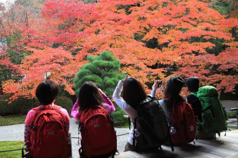 Konsep Taman Jepang Yang Bisa Dijadikan Inspirasi Rumah Anda