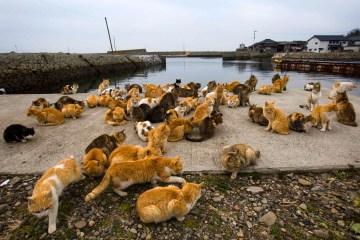Rasakan Serunya Wisata Kerajaan Kucing Pada Prefektur Ehime